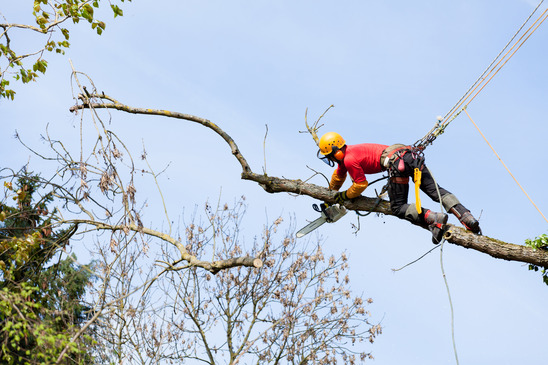 Winter Park FL Tree Service